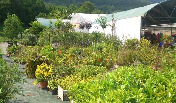 Grand choix en pépinière : arbres fruitiers et d'ornement, arbustes fleuris, arbustes de haies, rosiers...